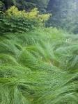 Cestovní tráva