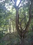 Tam bylo stromů :D