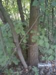 Další les