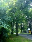 Nějaký strom